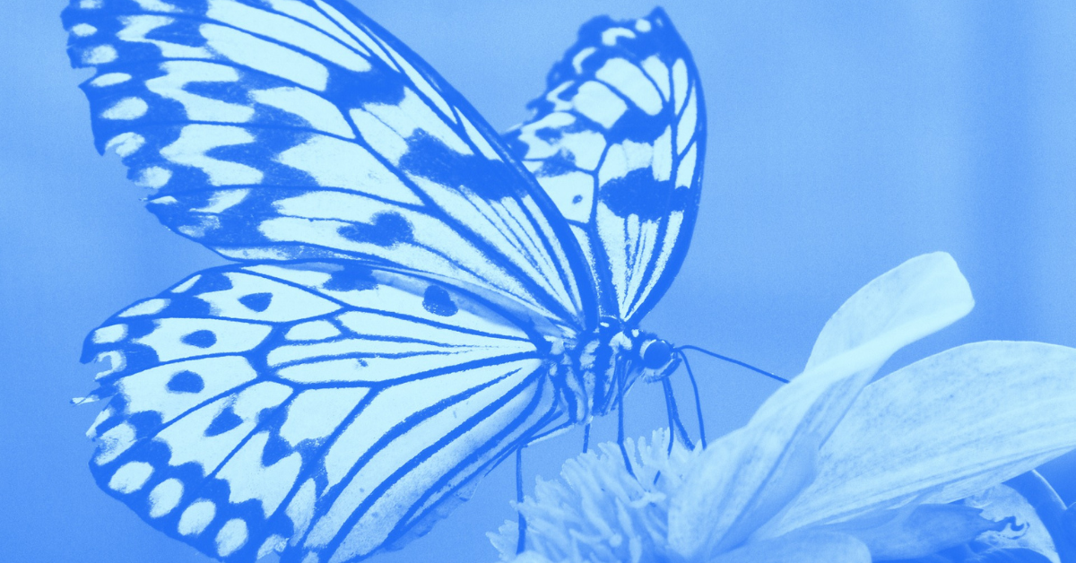 The Butterfly Effect: Getting A Client 4 Years Later